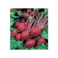 Beetroot Rhonda x 150 seeds