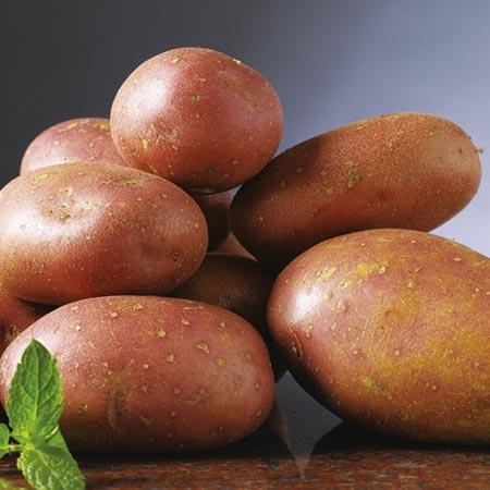 Seed Potatoes - Rooster 3kg (Maincrop)