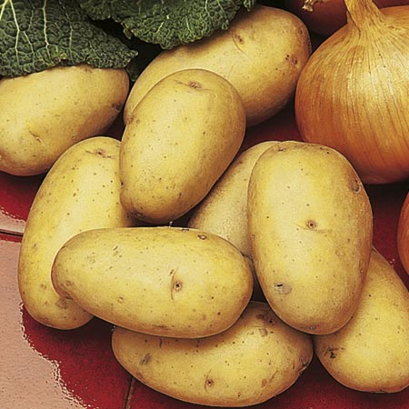 Seed Potatoes - Kestrel 3kg (Second Early)