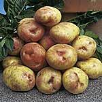Seed Potatoes - King Edward 3kg (Maincrop)