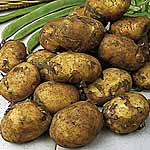 Seed Potatoes - Maris Peer 3kg (Second Early)