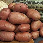 Seed Potatoes - Desiree 3kg (Maincrop)