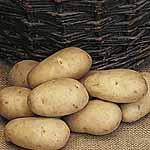 Seed Potatoes - Maris Piper 3kg (Maincrop)