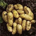 Seed Potatoes - Charlotte 3kg (Salad)