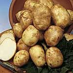 Seed Potatoes - Pentland Javelin 3kg (First Early)
