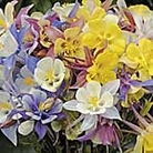 Aquilegia Simply The Best Mix Seeds