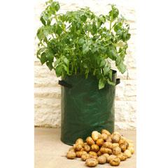Patio Potato Planter Pack of 3