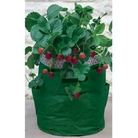 Strawberry Patio Planter Pack of 2