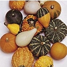 Gourd (Inedible) Ornamental Seeds