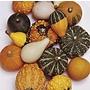 Gourd (Inedible) Ornamental Seeds