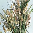 Grasses Ornamental Choice Mix Seeds