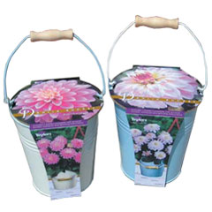 Dahlia Bulb Outdoor Patio Growing Kit