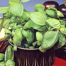 Herb Seeds- Basil Sweet Green