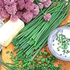 Herb  Seeds - Chives
