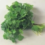 Herb Seeds - Coriander