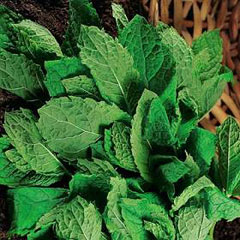 Herb Seeds - Mint (Peppermint)