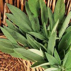 Herb Seeds - Sage
