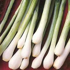 Vegetable Seeds - Spring Onion White Lisbon