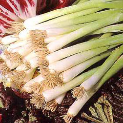 Vegetable Seeds - Spring Onion Winter White Bunching