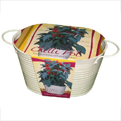 Chilli Seed Planter