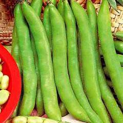 Vegetable Seeds - Broad Bean Masterpiece Green Longpod