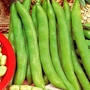 Vegetable Seeds - Broad Bean Masterpiece Green Longpod