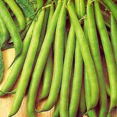 Vegetable Seeds - Dwarf Bean Tendergreen
