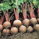 Vegetable Seeds - Beetroot Red Ace