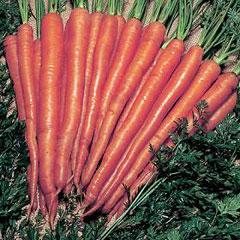 Vegetable Seeds - Carrot Sugarsnax 54 F1 Hybrid