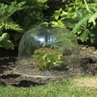 Dome Cloche Large - 3 Pack