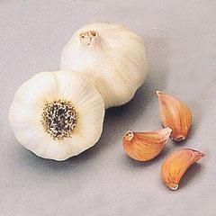 French Garlic Cristo- Pack of 3