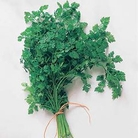 Herb Seeds - Chervil