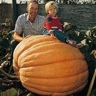 Vegetable Seeds - Pumpkin Atlantic Giant
