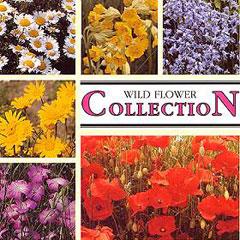 Flower Seeds - Wild Flower Collection