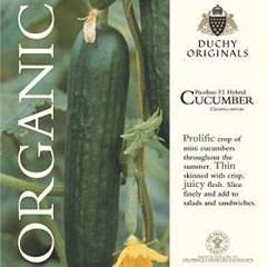 Cucumber Picolino - Duchy Originals Organic Seeds