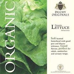 Lettuce Butterhead Dynamite - Duchy Originals Organic Seeds