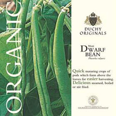 Dwarf Bean Maxi - Duchy Originals Organic Seeds