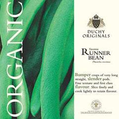 Runner Bean Enorma - Duchy Originals Organic seeds