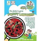 RHS Childrens Seeds - Poppy Ladybird