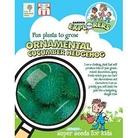 RHS Childrens Seeds - Ornamental Cucumber Hedgehog