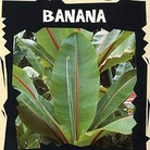 World Garden Seeds - Banana