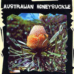 World Garden Seeds - Australian Honeysuckle