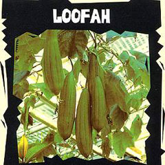 Exotic Seeds - Loofah