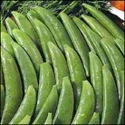 Vegetable Seeds - Pea Mangetout