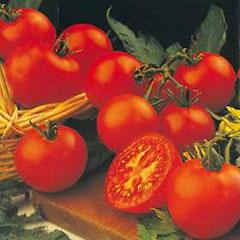 Fruit Seeds -Tomato Shirley F1 Hybrid