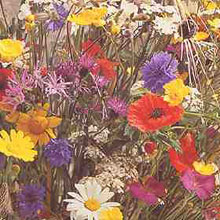 Flower Seeds-Wildflower Mixture