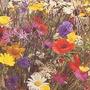 Flower Seeds-Wildflower Mixture