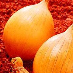Vegetable Seeds - Onion (Show) Ailsa Craig