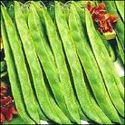 Vegetable Seeds - Runner Bean Lady Di