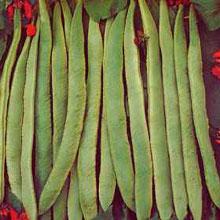 Vegetable Seeds - Runner Bean Scarlet Emperor